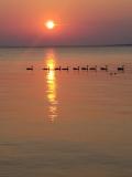Our Wonderful Waterway - Denise Brown