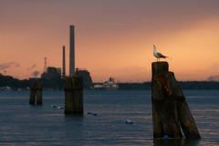 Our Wonderful Waterway - Ryan Felax