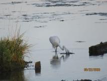 Our Wonderful Waterway - Shari Robinson