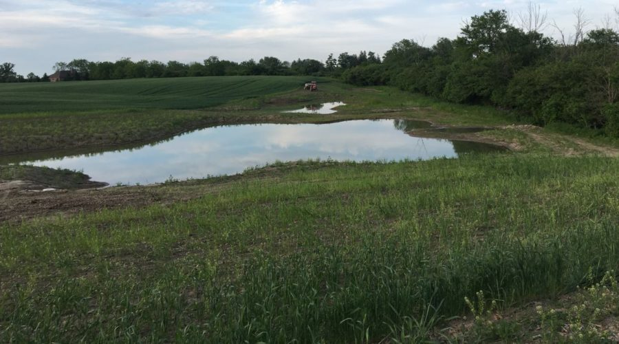 Wetland project post installation